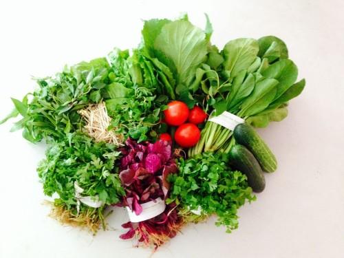 Top 10 cách nhận biến rau củ có hoá chất, thuốc trừ sâu 58